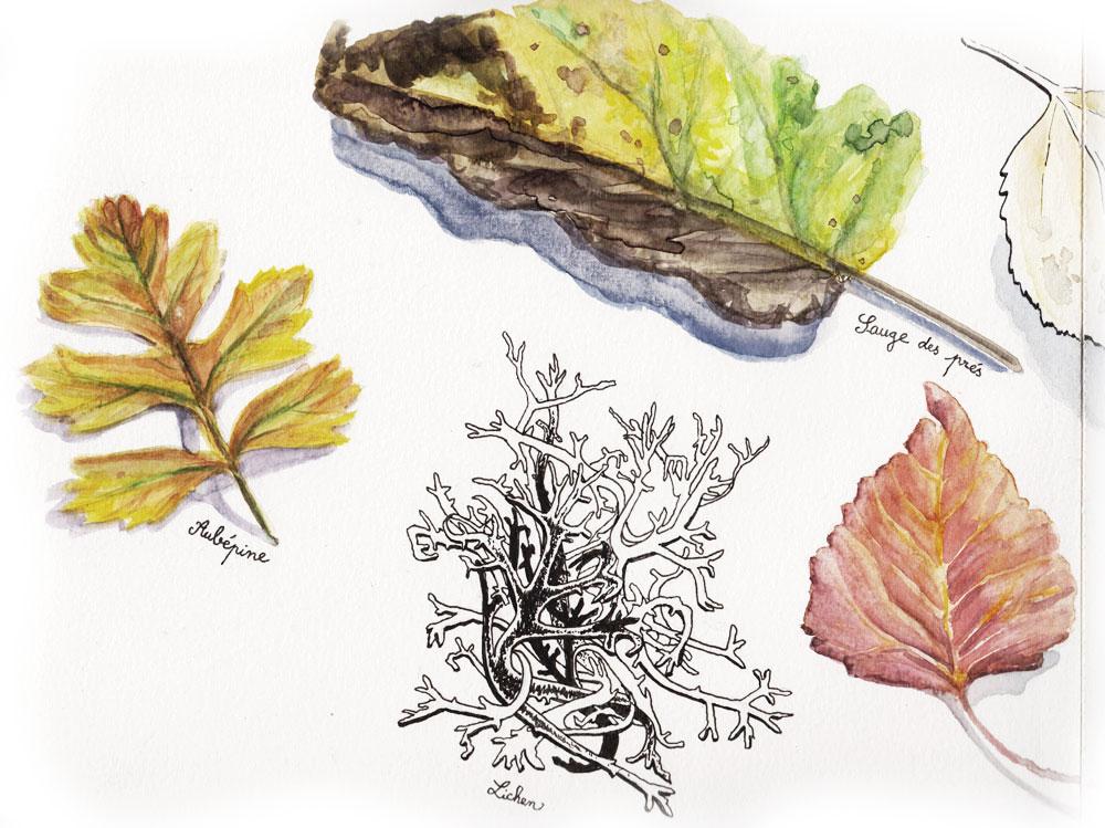 Végétaux ramassés le long des chemins du Vercors (aquarelle et feutre de Jérémy Zucchi).