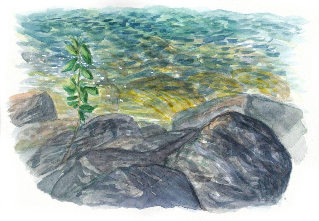 Rochers au port de Sciez (aquarelle de Jérémy Zucchi)